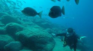 Plongée sous-marine-Costa Adeje, Tenerife-Adventure dives near Costa Adeje, Tenerife-2