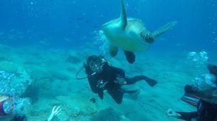 Plongée sous-marine-Costa Adeje, Tenerife-Adventure dives near Costa Adeje, Tenerife-1