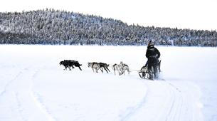 Dog sledding-Törmänen-Dog Sledding Adventure near Törmänen-5