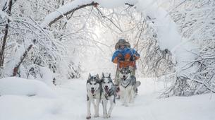 Dog sledding-Rovaniemi-Mushing Masterclass near Rovaniemi-6