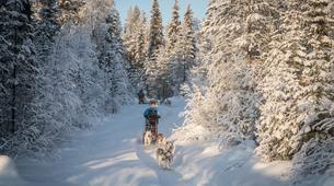 Dog sledding-Rovaniemi-Mushing Masterclass near Rovaniemi-5