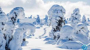Raquette à Neige-Rovaniemi-Lapland wilderness snowshoe excursion from Rovaniemi-6