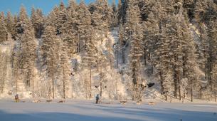 Dog sledding-Rovaniemi-Mushing Masterclass near Rovaniemi-4