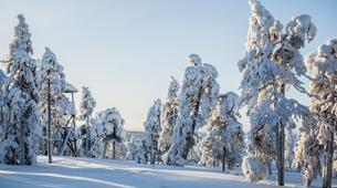 Raquette à Neige-Rovaniemi-Lapland wilderness snowshoe excursion from Rovaniemi-2