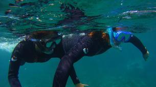 Snorkeling-El Médano, Tenerife-Snorkeling excursion near El Medano, Tenerife-6