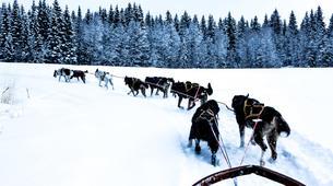 Dog sledding-Åre-Dog Sledding Day Trip in Åre-6