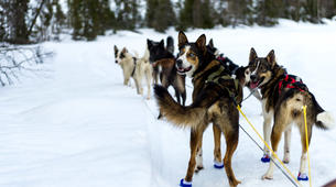 Dog sledding-Åre-Dog Sledding Day Trip in Åre-3