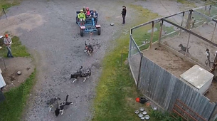 Dog sledding-Kiruna-Kennel Visit and Short Husky Ride, near Kiruna-5