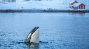 Experiences Wildlife-Tromsø-Whale watching safari cruise from Tromso-1