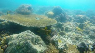 Scuba Diving-Zanzibar-PADI Open Water Course Nungwi, Zanzibar-3