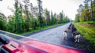 Dog sledding-Kiruna-Kennel Visit and Short Husky Ride, near Kiruna-1