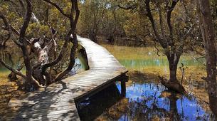 Sea Kayaking-Paihia-Kayaking and Walking Tour of Haruru Falls, Bay of Islands-5
