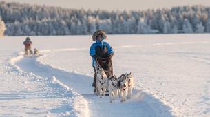 Dog sledding-Rovaniemi-Dog Sledding near Rovaniemi-1