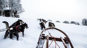 Dog sledding-Åre-Dog Sledding Day Trip in Åre-5