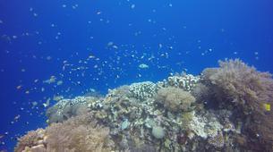 Snorkeling-Zanzibar-Snorkelling Excursion to Mnemba Island-2