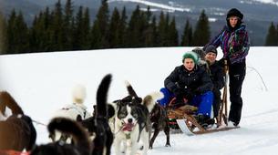 Dog sledding-Åre-Dog Sledding Day Trip in Åre-1