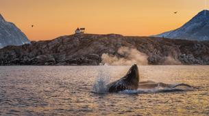 Experiences Wildlife-Tromsø-Whale watching safari cruise from Tromso-3