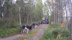 Dog sledding-Kiruna-Kennel Visit and Short Husky Ride, near Kiruna-3