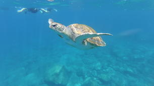 Sea Kayaking-Los Cristianos, Tenerife-Kayaking and snorkeling with turtles in Los Cristianos, Tenerife-2