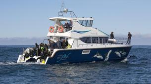 Wildlife Experiences-Kaikoura-Swimming with Dolphins in Kaikoura-4