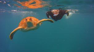 Snorkeling-Los Cristianos, Tenerife-Snorkeling excursion near Los Cristianos, Tenerife-1