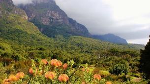 Hiking / Trekking-Cape Town-Hike to Kirstenbosch Gardens in Cape Town-4