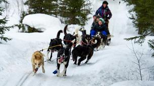 Dog sledding-Åre-Dog Sledding Day Trip in Åre-2
