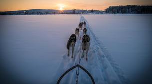Dog sledding-Rovaniemi-Dog Sledding near Rovaniemi-5