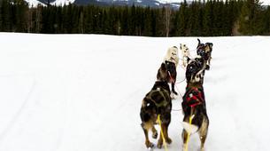Dog sledding-Åre-Dog Sledding Day Trip in Åre-4