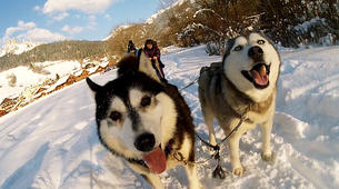 Dog sledding-Avoriaz, Portes du Soleil-Dog Sledding Taster Lesson in Avoriaz, Portes du Soleil-1