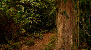 Hiking / Trekking-Arenal Volcano National Park-Hiking in Arenal Volcano National Park-2