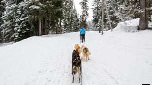 Dog sledding-Avoriaz, Portes du Soleil-Dog Sledding Taster Lesson in Avoriaz, Portes du Soleil-4