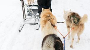 Dog sledding-Avoriaz, Portes du Soleil-Dog Sledding Taster Lesson in Avoriaz, Portes du Soleil-8