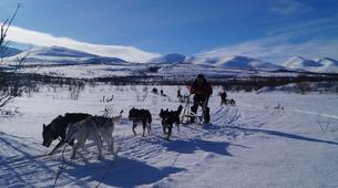 Dog sledding-Abisko-Drive Your Own Dogsled in the Arctic Circle-1