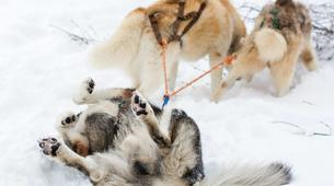Dog sledding-Avoriaz, Portes du Soleil-Dog Sledding Taster Lesson in Avoriaz, Portes du Soleil-6