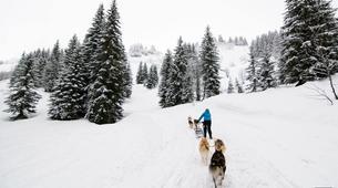 Dog sledding-Avoriaz, Portes du Soleil-Dog Sledding Taster Lesson in Avoriaz, Portes du Soleil-5