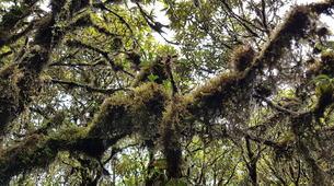 Hiking / Trekking-Chiang Mai-Hiking in Doi Inthanon National Park-4