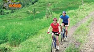 Mountain bike-Bali-MTB Tour of the Tegallalang Rice Terraces in Bali-4