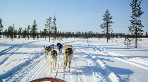 Dog sledding-Rovaniemi-Husky Dog Sledding Adventure near Rovaniemi-1
