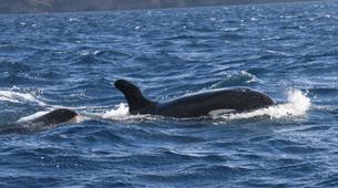 Snorkeling-Les Trois-Îlets-Snorkeling et Observation des Dauphins aux Trois-Îlets, Martinique-7