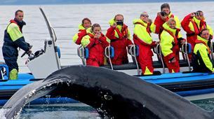 Wildlife Experiences-Húsavík-Whale Watching & Puffin Island Tour in Húsavík-2