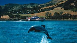 Helicopter tours-Christchurch-Scenic Helicopter Tour of Akaroa-4