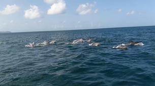 Snorkeling-Les Trois-Îlets-Snorkeling et Observation des Dauphins aux Trois-Îlets, Martinique-1