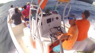 Snorkeling-Les Trois-Îlets-Snorkeling et Observation des Dauphins aux Trois-Îlets, Martinique-3