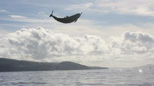 Snorkeling-Les Trois-Îlets-Snorkeling et Observation des Dauphins aux Trois-Îlets, Martinique-8
