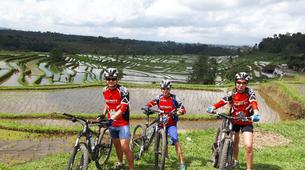 Mountain bike-Bali-Multi-Day MTB Bali Tour-4