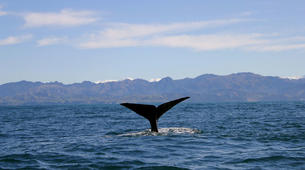 Helicopter tours-Christchurch-Whale Watching Helicopter Tour in Kaikoura-5