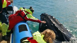 Wildlife Experiences-Húsavík-Whale Watching & Puffin Island Tour in Húsavík-4