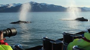Wildlife Experiences-Húsavík-Whale Watching & Puffin Island Tour in Húsavík-3