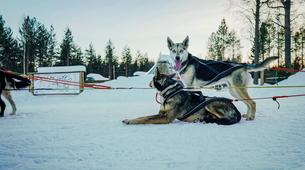 Dog sledding-Rovaniemi-Husky Dog Sledding Adventure near Rovaniemi-3